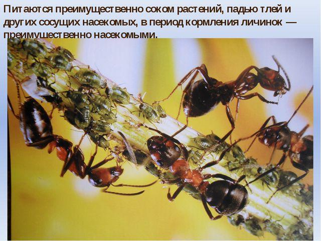 Питаются преимущественно соком растений, падью тлей и других сосущих насекомы...