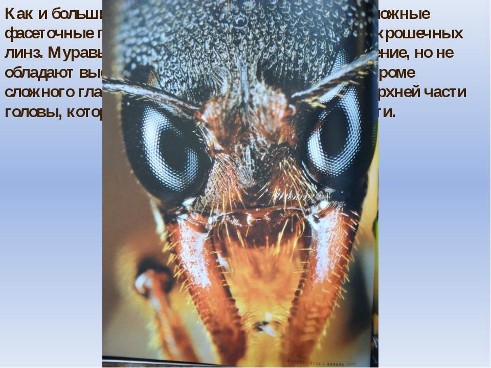Как и большинство насекомых, муравьи имеют сложные фасеточные глаза, состоящи...