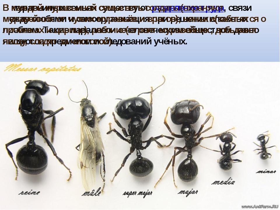 В муравьиных семьях существуют разделение труда, связи между особями и самоор...