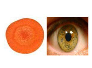 Сәбіз – Carrot – Морковь