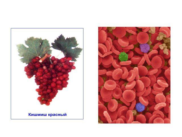 Жүзім – Grape – Виноград