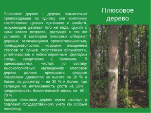Плюсовое дерево Плюсовое дерево - дерево, значительно превосходящее по одному