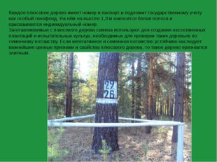 Каждое плюсовое дерево имеет номер и паспорт и подлежит государственному учет