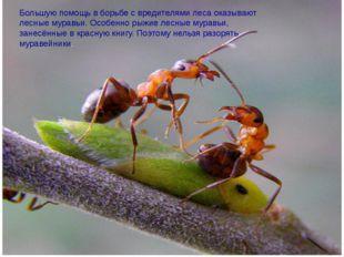 Большую помощь в борьбе с вредителями леса оказывают лесные муравьи. Особенн