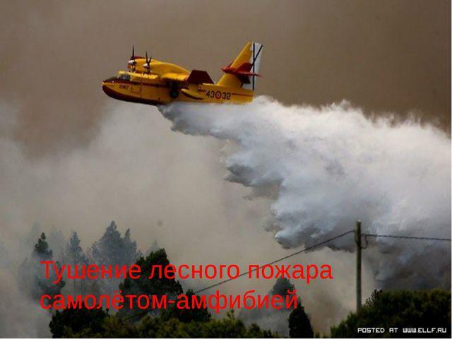 Тушение лесного пожара самолётом-амфибией