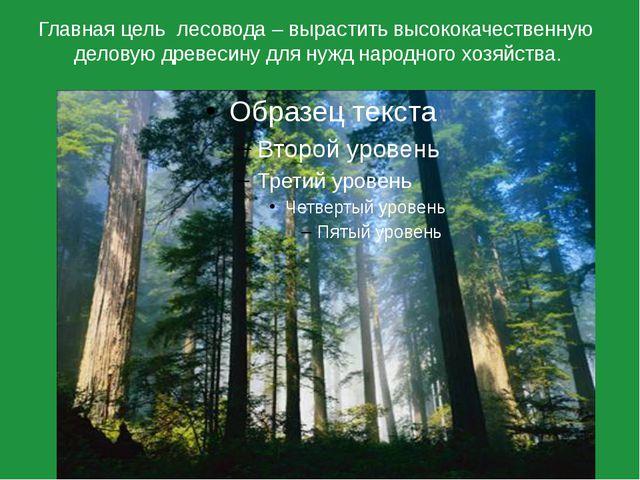 Главная цель лесовода – вырастить высококачественную деловую древесину для ну...