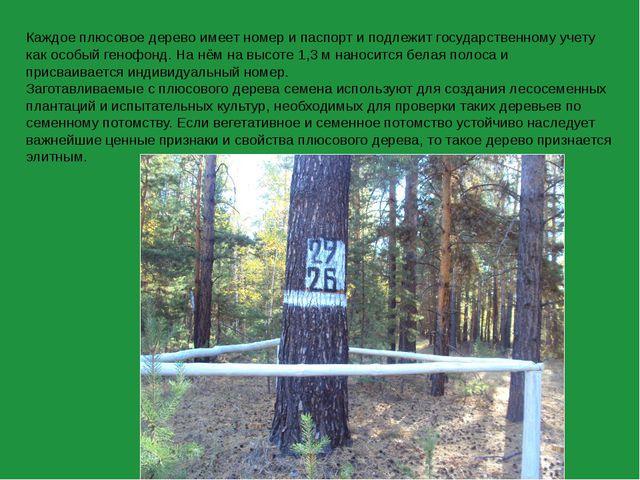 Каждое плюсовое дерево имеет номер и паспорт и подлежит государственному учет...