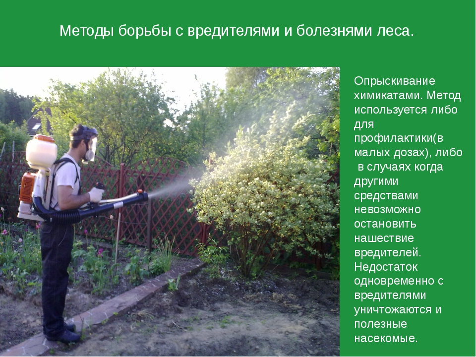 Методы борьбы с вредителями и болезнями леса. Опрыскивание химикатами. Метод...