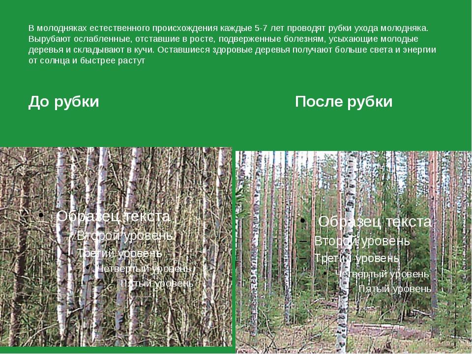 Правила ухода за рубками леса