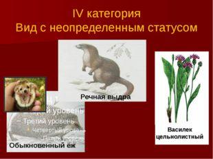 IV категория Вид с неопределенным статусом Обыкновенный ёж Речная выдра Васи