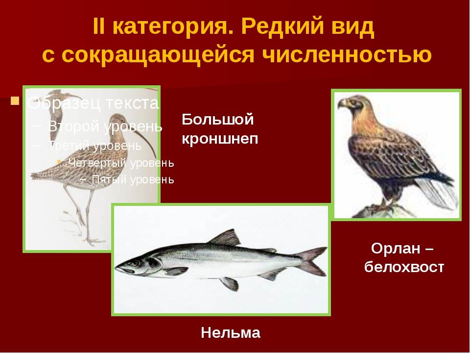 II категория. Редкий вид с сокращающейся численностью Большой кроншнеп Орлан...