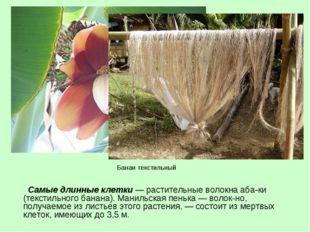 Самые длинные клетки — растительные волокна абаки (текстильного банана). Ма
