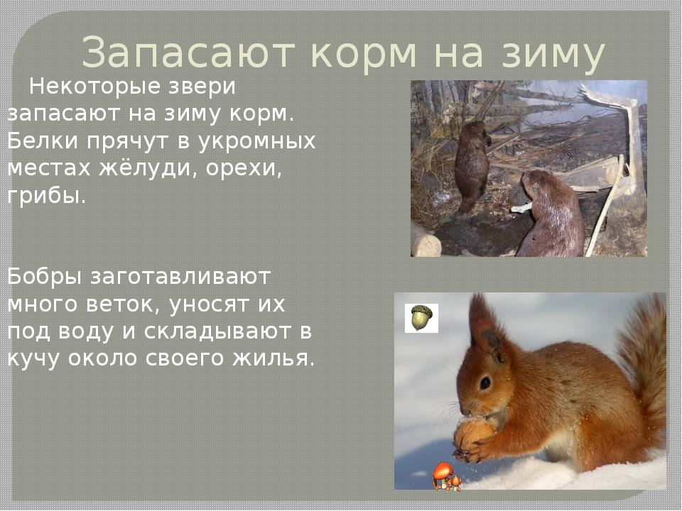 Плешаков новицкая окружающий мир 2 класс презентация к уроку как животные готовятся к химе