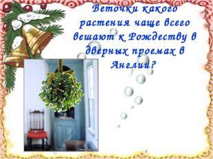 Веточки какого растения чаще всего вешают к Рождеству в дверных проемах в Анг