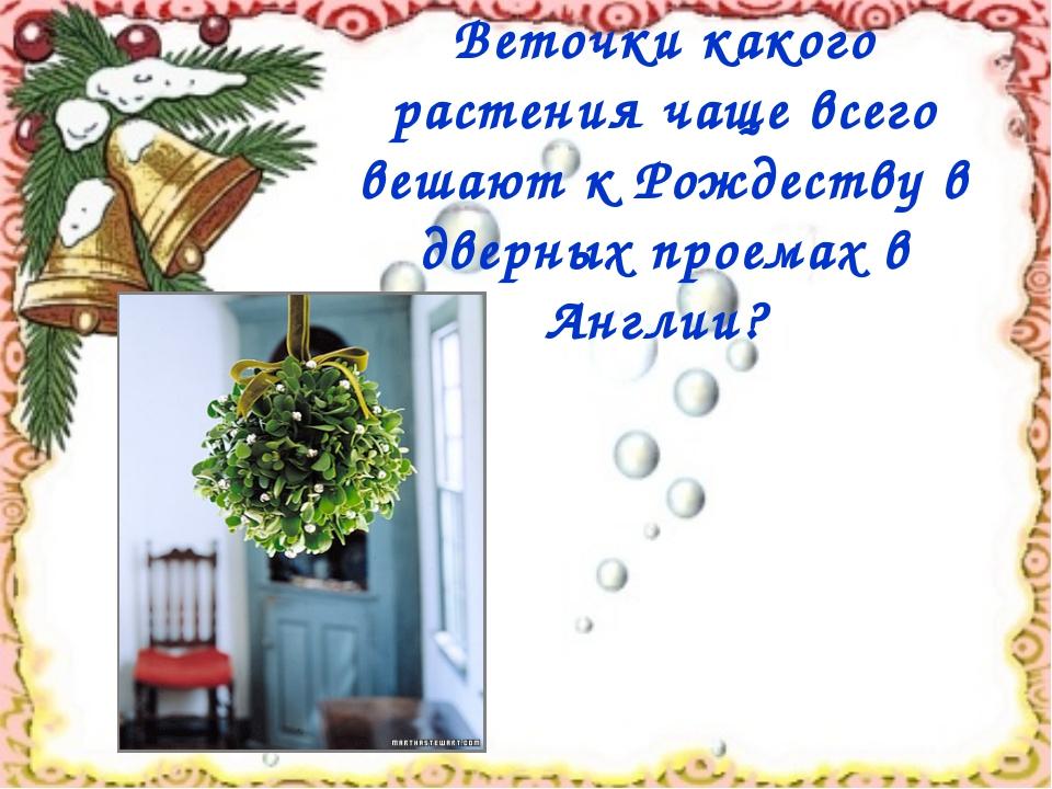 Веточки какого растения чаще всего вешают к Рождеству в дверных проемах в Анг...