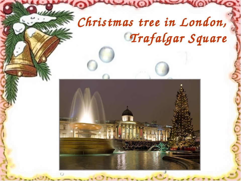 Christmas tree in London, Trafalgar Square