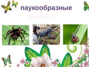 паукообразные Имеют 8 ног