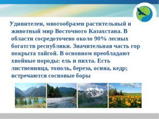 Удивителен, многообразен растительный и животный мир Восточного Казахстана.