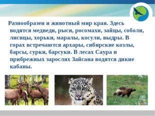 Разнообразен и животный мир края. Здесь водятся медведи, рыси, росомахи, зай