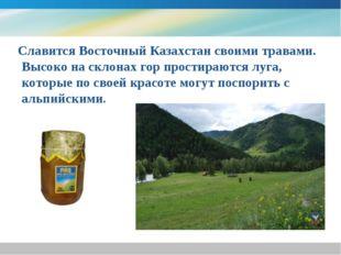 Славится Восточный Казахстан своими травами. Высоко на склонах гор простираю