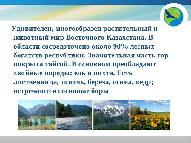 Удивителен, многообразен растительный и животный мир Восточного Казахстана....