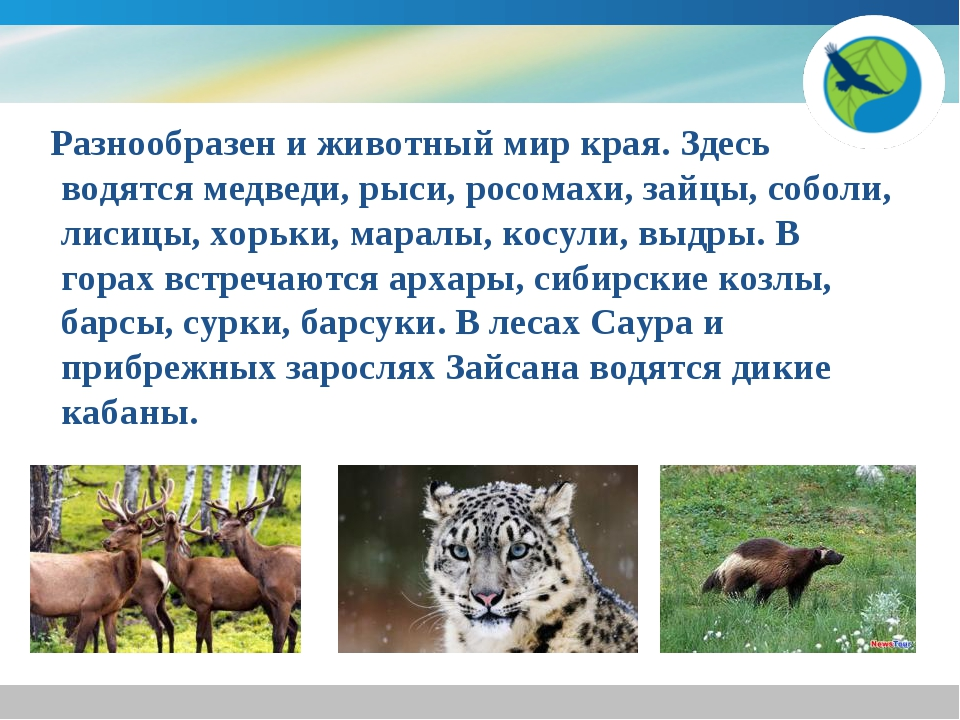 Разнообразен и животный мир края. Здесь водятся медведи, рыси, росомахи, зай...