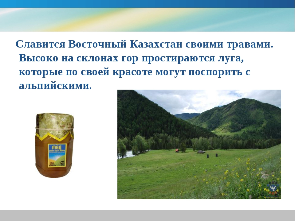 Славится Восточный Казахстан своими травами. Высоко на склонах гор простираю...