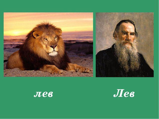 лев Лев