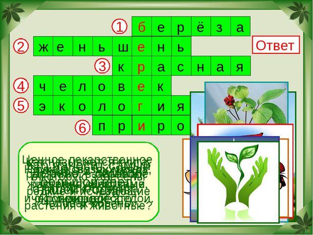 2 6 5 4 3 1 Ответ Дерево – символ нашей Родины. Ценное лекарственное растение...