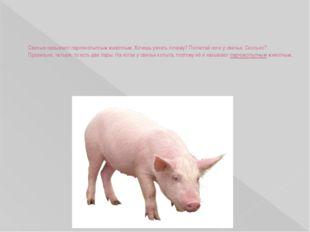 Свинью называют парнокопытным животным. Хочешь узнать почему? Посчитай ноги у