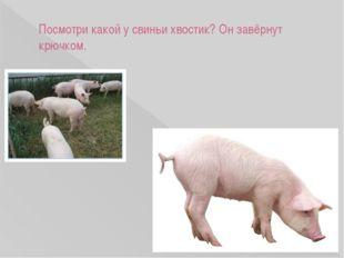 Посмотри какой у свиньи хвостик? Он завёрнут крючком.