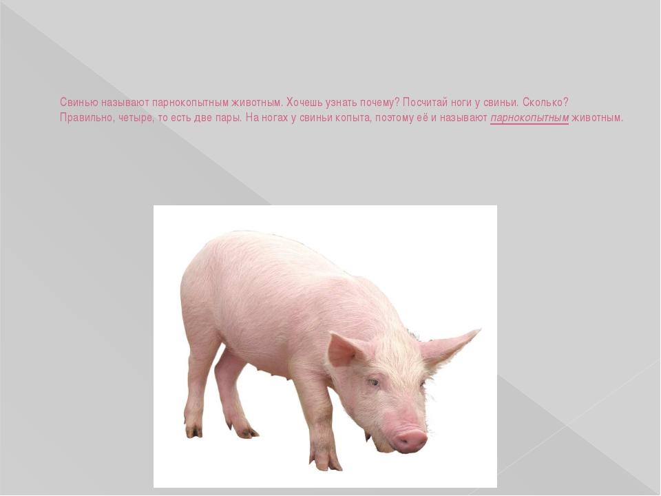Свинью называют парнокопытным животным. Хочешь узнать почему? Посчитай ноги у...