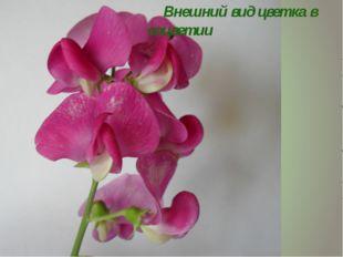 Внешний вид цветка в соцветии