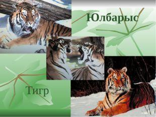 Юлбарыс Тигр