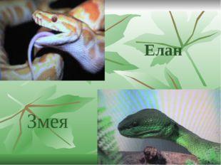Елан Змея