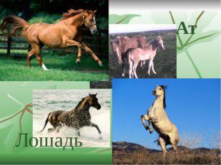 Ат Лошадь