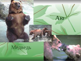 Аю Медведь