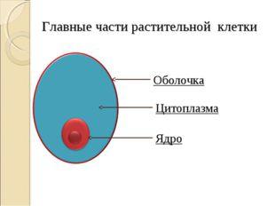 Главные части растительной клетки Оболочка Цитоплазма Ядро