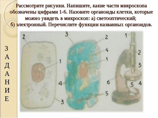 Рассмотрите рисунки. Напишите, какие части микроскопа обозначены цифрами 1-6....