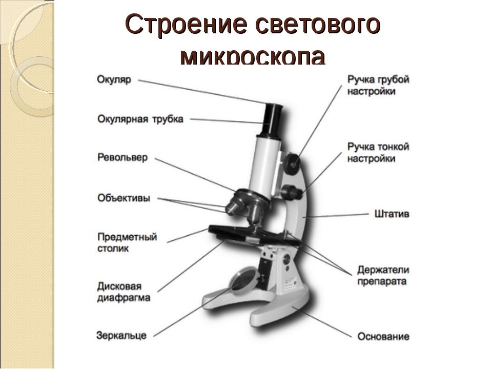 Строение светового микроскопа