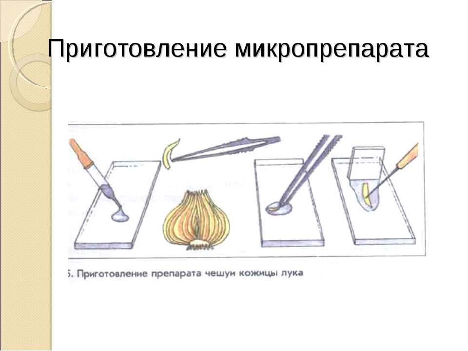 Приготовление микропрепарата