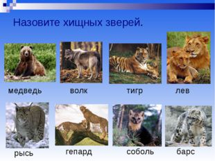 Назовите хищных зверей. медведь волк тигр рысь лев гепард соболь барс