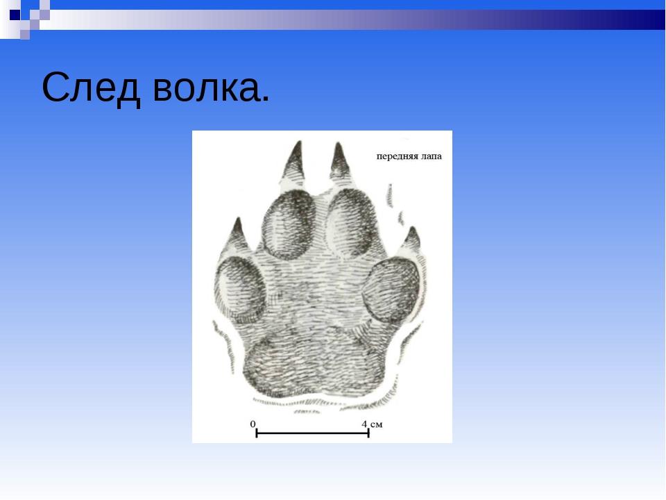 Картинки следы волка