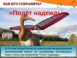КАК ЕГО СОХРАНИТЬ? В России осуществляется уникальный международный экологиче