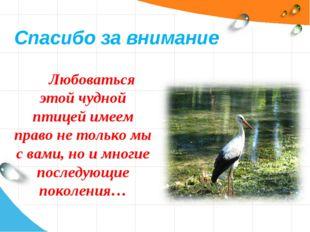 Любоваться этой чудной птицей имеем право не только мы с вами, но и многие по