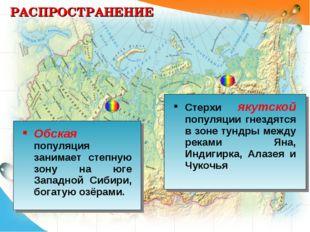 РАСПРОСТРАНЕНИЕ Обская популяция занимает степную зону на юге Западной Сибири