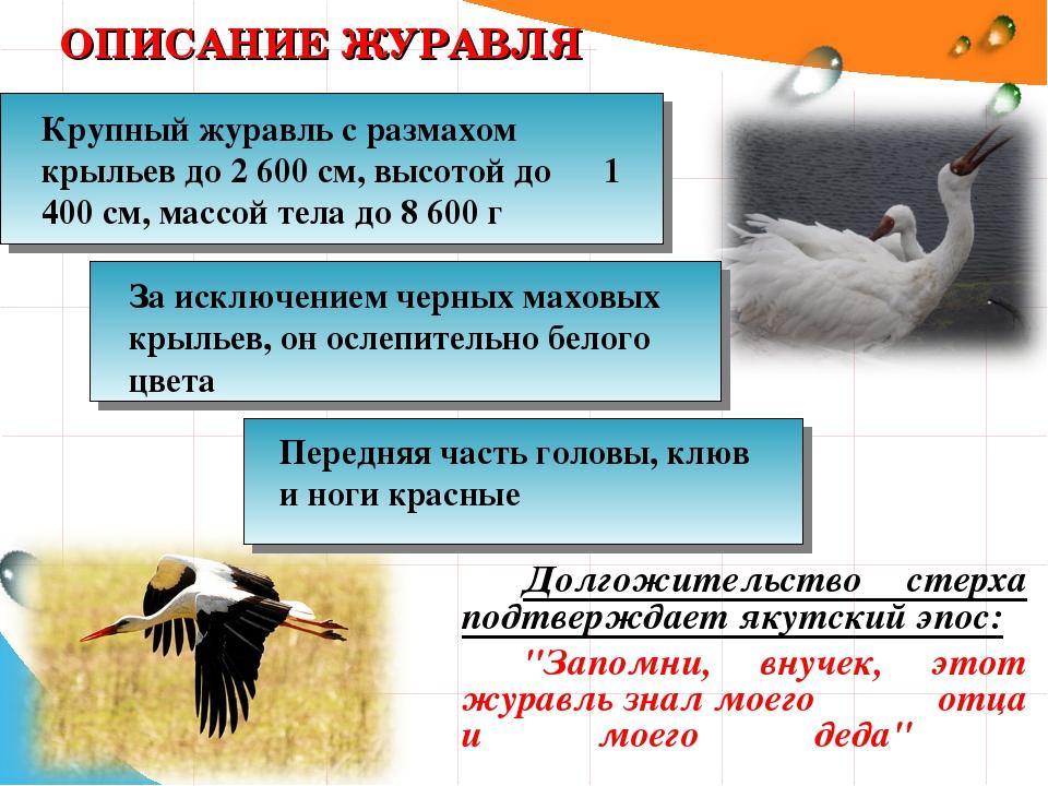 """ОПИСАНИЕ ЖУРАВЛЯ Долгожительство стерха подтверждает якутский эпос: """"Запомни,..."""