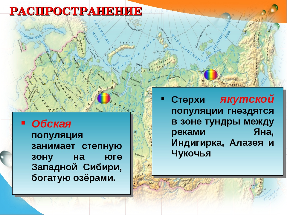 РАСПРОСТРАНЕНИЕ Обская популяция занимает степную зону на юге Западной Сибири...
