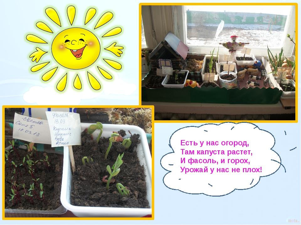 Есть у нас огород, Там капуста растет, И фасоль, и горох, Урожай у нас не пло...