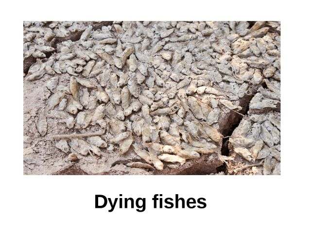 Dying fishes